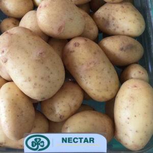 [:ru]Семенной картофель Нектар (Голландия)[:ua]Насіннєва картопля Нектар (Голландія)[:]