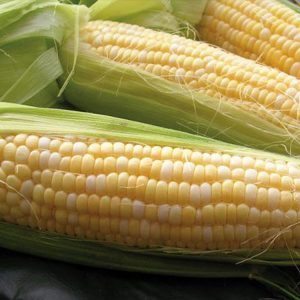 [:ru]Семена кукурузы НС 2662 [:ua]Насіння кукурудзи НС 2662[:]