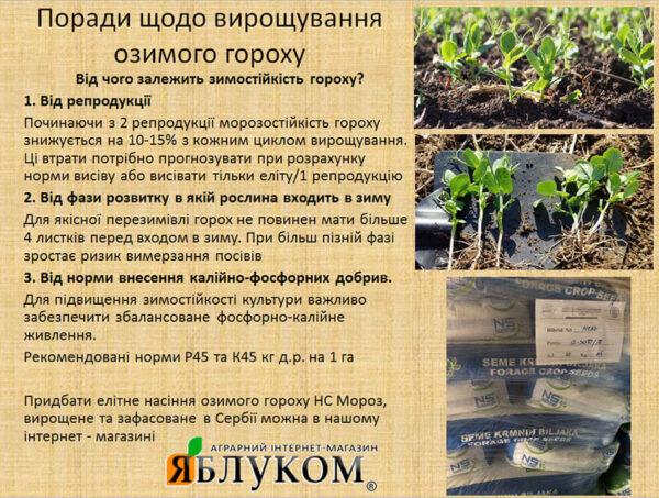 Семена озимого гороха НС Мороз