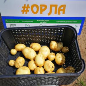 Семенной картофель Орла