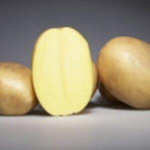 Семенной картофель Озирис (Германия)