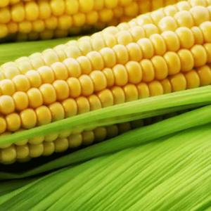 Семена кукурузы Пионер П7709
