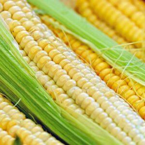 [:ru]Семена кукурузы Пионер П8816 (P8816)[:ua]Насіння кукурудзи Піонер П8816 (P8816)[:]