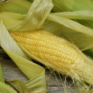 [:ru]Семена кукурузы Пионер П9000[:ua]Насіння кукурудзи Піонер П9000[:]