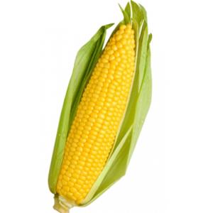 [:ru]Семена кукурузы Пионер П9721[:ua]Насіння кукурудзи Піонер П9721[:]