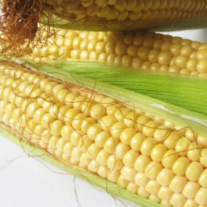 [:ru]Семена кукурузы Пионер П9911[:ua]Насіння кукурудзи Піонер П9911[:]