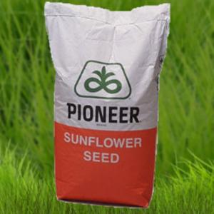Семена подсолнечника Пионер P64LE25 (П64ЛЕ25)