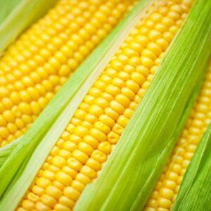 Семена кукурузы Пионер ПР39Г83 (PR39G83)