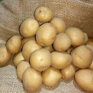 Семенной картофель Ривьера (Голландия)