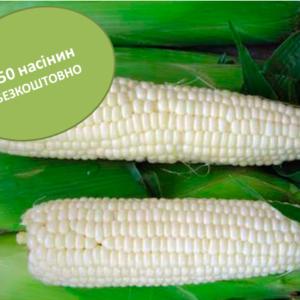 Сахарная кукуруза Белый Кролик