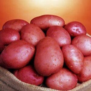 [:ru]Семенной картофель Сетанта (Голландия)[:ua]Насіннєва картопля Сетанта Голландія (1 репродукція)[:]