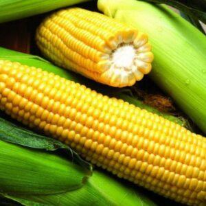 [:ru]Семена кукурузы ЕС Сигма[:ua]Насіння кукурудзи ЄС Сігма[:]