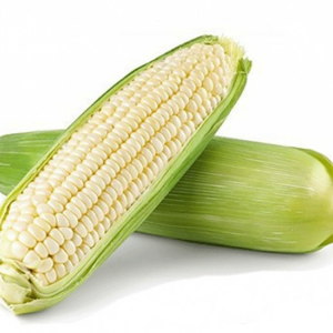 [:ru]Семена кукурузы ЕС Сириус[:ua]Насіння кукурудзи ЕС Сіріус[:]