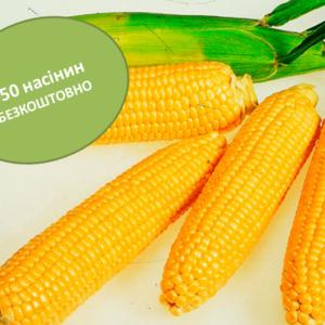 Сахарная кукуруза Гермиона