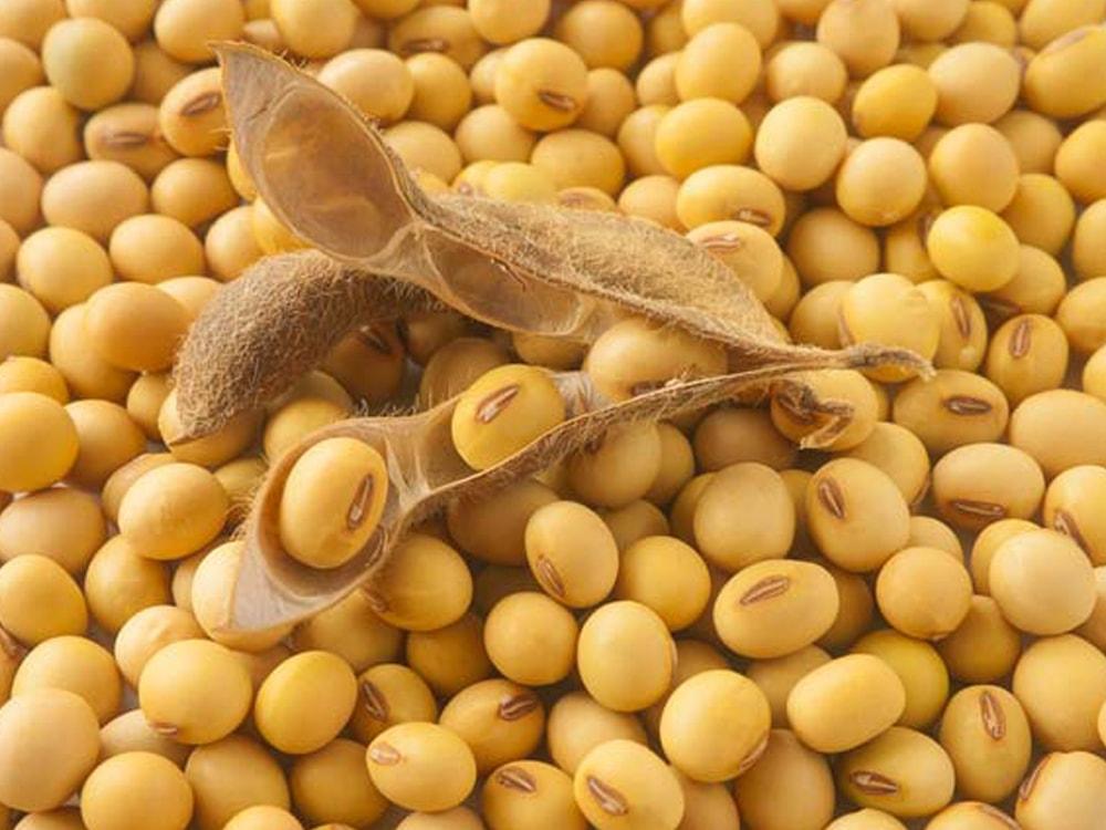 Картинки по запросу Семена сои в Украине