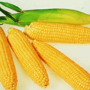 [:ru]Семена кукурузы Топмен[:ua]Насіння кукурудзи Топмен[:]