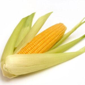 [:ru]Семена кукурузы ЛГ 3258 [:ua]Насіння кукурудзи ЛГ 3258 [:]