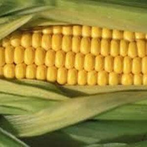 [:ru]Семена кукурузы ЛГ 3395[:ua]Насіння кукурудзи ЛГ 3395 [:]