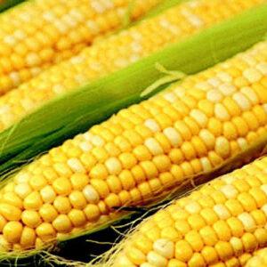 [:ru]Семена кукурузы ЛГ 3475[:ua]Насіння кукурудзи ЛГ 3475 [:]