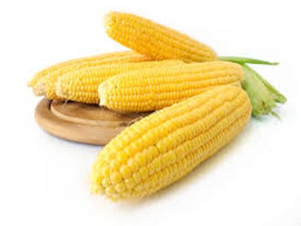 Семена кукурузы P9241