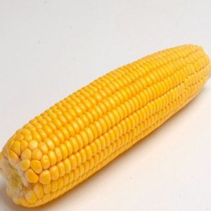 [:ru]Семена кукурузы PR38N86[:ua]Насіння кукурудзи PR38N86[:]