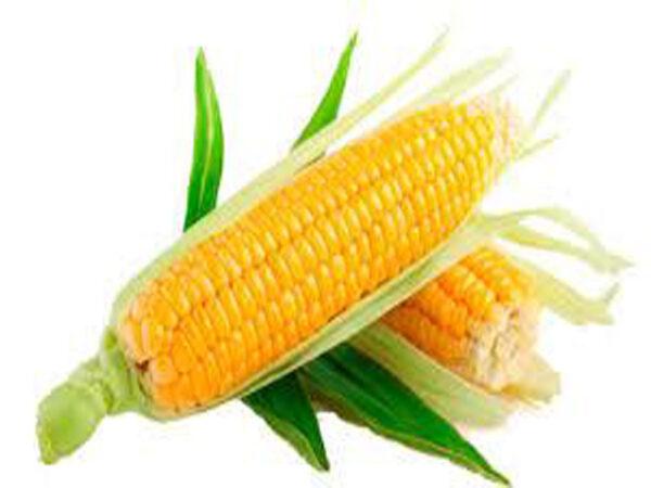 Семена кукурузы PR39B76 (ПР39Б76)