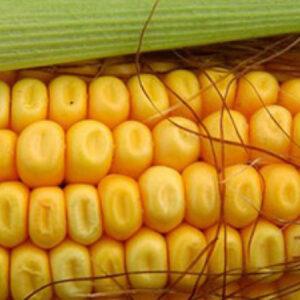Семена кукурузы Адевей