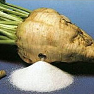 Семена сахарной свеклы Аскета