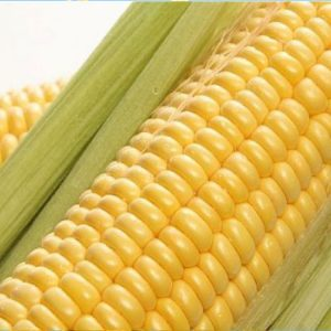 [:ru]Семена кукурузы Делитоп[:ua]Насіння кукурудзи Делітоп[:]
