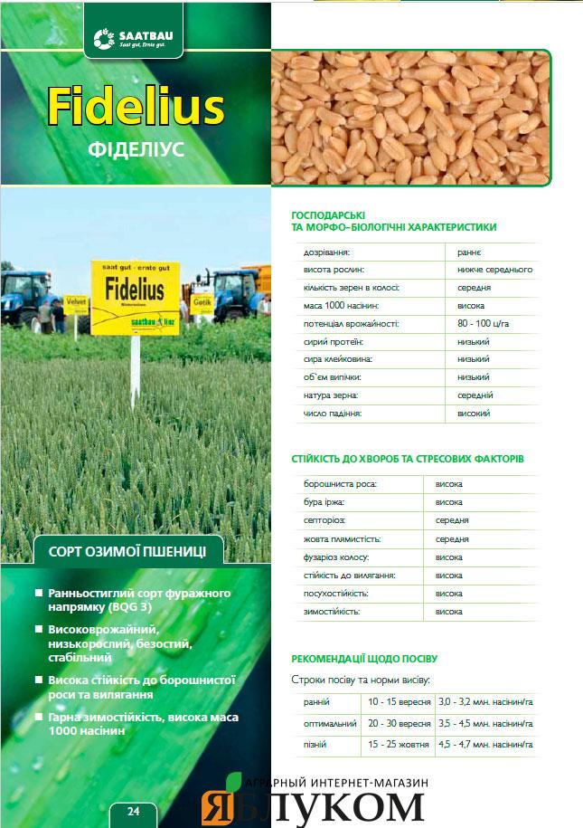 Семена озимой пшеницы Фиделиус