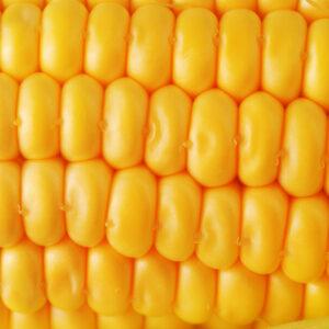[:ru]Семена кукурузы Фруктис[:ua]Насіння кукурудзи Фруктіс[:]
