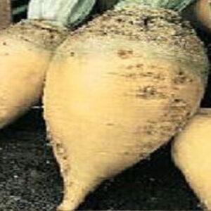 Семена сахарной свеклы Газета