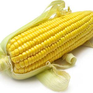 [:ru]Семена кукурузы НК Джитаго [:ua]Насіння кукурудзи НК Джитаго [:]