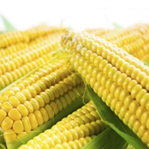 [:ru]Семена кукурузы КС Кларити [:ua]Насіння кукурудзи КС Кларіті [:]