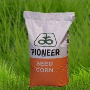 Семена кукурузы PR39A50