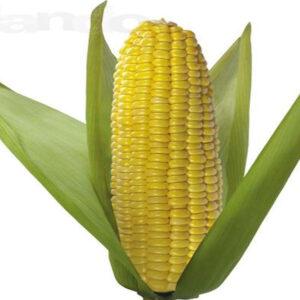 [:ru]Семена кукурузы НК Леморо [:ua]Насіння кукурудзи НК Леморо [:]
