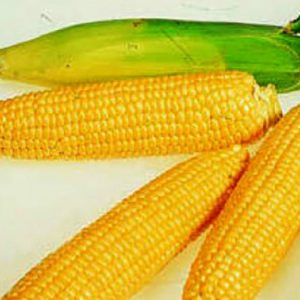 [:ru]Семена кукурузы НС 4015 [:ua]Насіння соняшнику  НС 4015 [:]