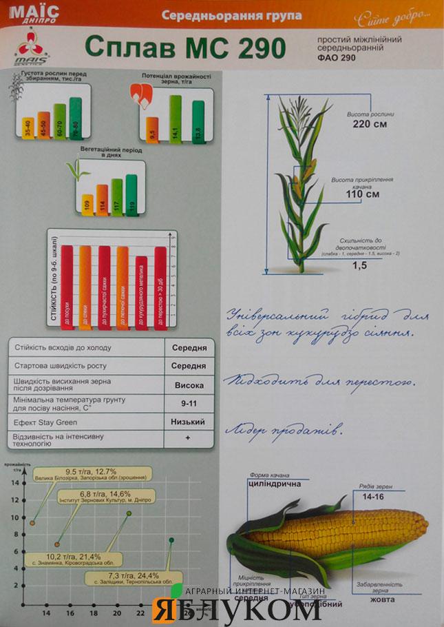 Семена кукурузы Сплав