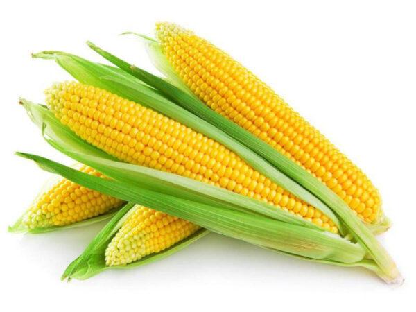 Семена кукурузы СИ Талисман