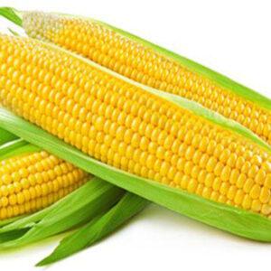 Семена кукурузы ДКС 3705