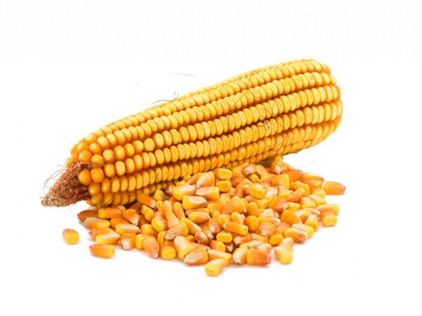 Семена кукурузы Бестселлер