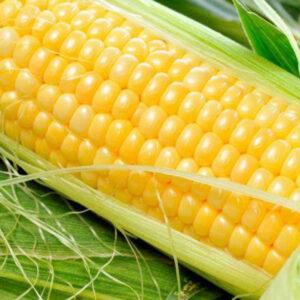 Семена кукурузы ДКС 3507