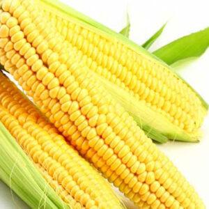 Семена кукурузы ДКС 3795
