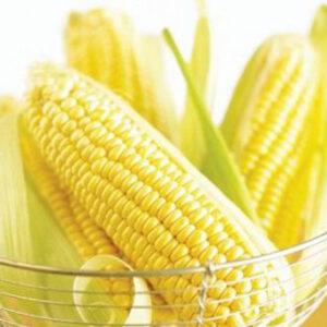 [:ru]Семена кукурузы ДКС 4590 [:ua]Насіння кукурудзи ДКС 4590 [:]