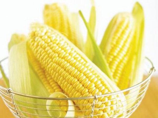 Семена кукурузы ДКС 4590
