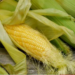[:ru]Семена кукурузы ДКС 4717 [:ua]Насіння кукурудзи ДКС 4717 [:]
