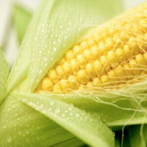 Семена кукурузы ДКС 5007