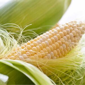 Семена кукурузы ДКС 5143