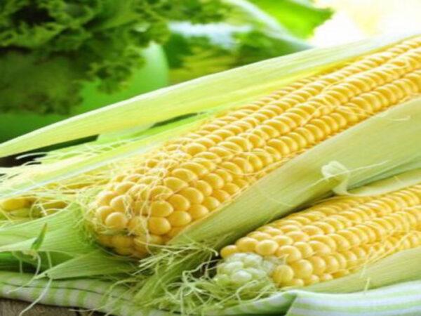 Семена кукурузы ДМС 2911