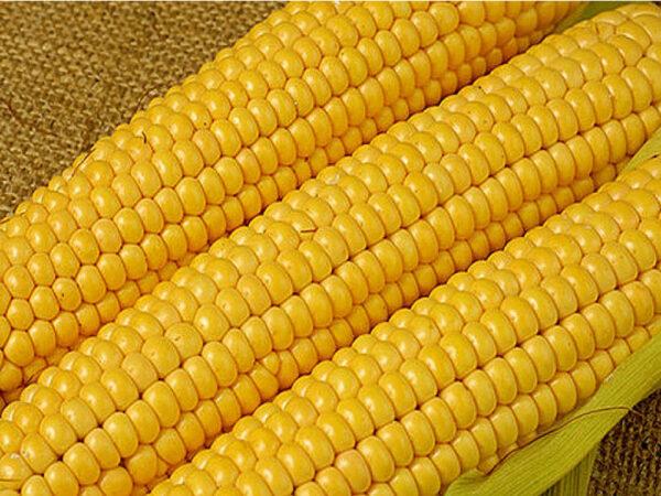 Семена кукурузы ДМС Супер